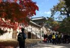 慶州「世界遺産」&釜山市内観光ツアー