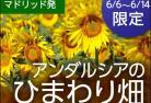 アンダルシアのひまわりが見たい!2017 ~灼熱の太陽の下で~ 【6月6日~14日 限定催行】
