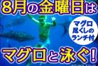 【8月限定】マグロと泳ぐ!ツナ・スイム・ツアー  8月は毎週金曜マグロの日!