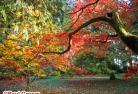 【11月2日・11月9日限定】秋の紅葉を楽しもう! ウエストンバート森林公園とテットベリー  ~マナーハウスで豪華なアフタヌーンティー付~