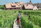 【プライベートツアー】日本語ガイドと行く 世界遺産ラヴォーの村めぐり半日観光 ~ワイン試飲付