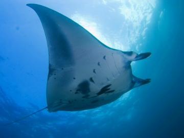 パパスダイブセンターで行くバリ島スクーバダイビング ヌサペニダ (体験ダイビング/ファンダイビング)