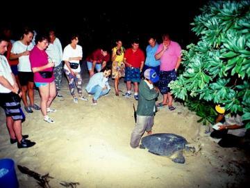 ウミガメの産卵観測とオランウータン保護区の旅 1泊2日