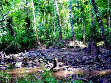 センス オブ ワンダー エコ ツアー~パラオの自然と文化を体験~