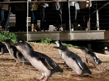 超格安! ペンギンパレード&コアラ保護センター
