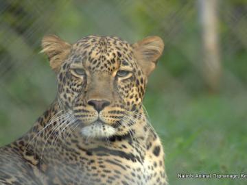 ナイロビ動物孤児院またはサファリウォーク&マンバ・ヴィレッジ半日観光