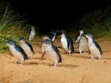 ペンギンパレードとワイルドライフパーク