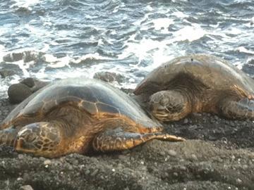一日一組限定! オアフ島からハワイ島に1日観光 あなた流ハワイ島観光!