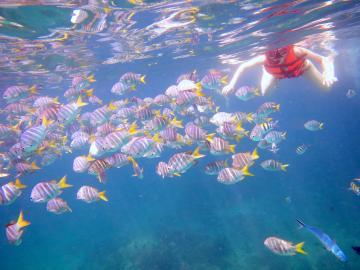 ラチャヤイ島&コーラル島、プーケットの人気2島巡り!