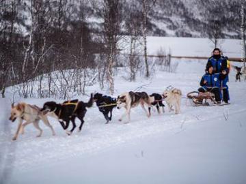 犬ぞりに乗って雪原を疾走 ハスキーサファリツアー