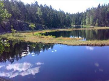 【8月3日~10月8日限定】専門の日本語ガイドがご案内 ヌークシオ国立公園でのマッシュルームハンティング!