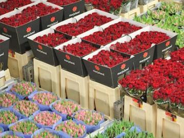 【月・火曜日限定】アールスメール花市場 日本語ガイドツアー 園芸専門家がご案内