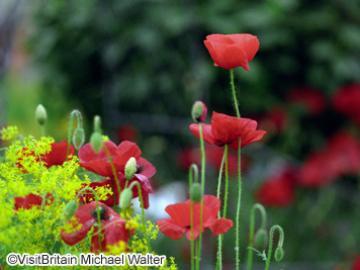 【5月22日限定】花の祭典「チェルシー・フラワーショー」&ウィンザー、テムズの宝石マーロー