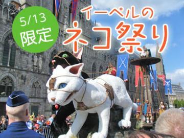 【5月13日限定】3年に1度!街中ネコだらけ!ベルギー・イーペルのネコ祭り