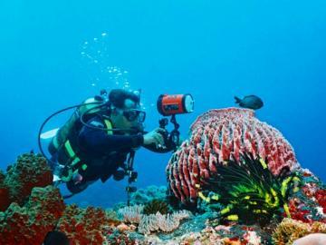 PADI5スター エナ・ダイブセンターによるスペシャリティーコース ダイビングの楽しみを広げよう!