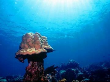 トゥンク・アブドゥル・ラーマン海洋公園でダイビング[体験ダイビング]
