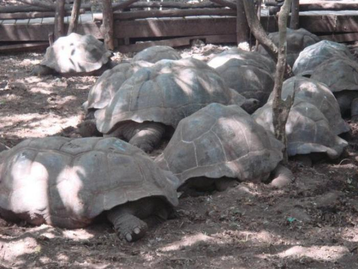 ダルエスサラームのおすすめ観光地の写真|ピックアップ! タンザニア 観光地情報情報